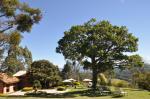 Pousada Quinta dos Pinhais