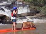 stand up paddle  dog - Socorro (SP)