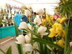 Orquídeas em Santo Antônio do Pinhal
