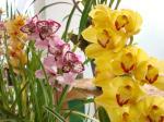 Festa da Orquídea